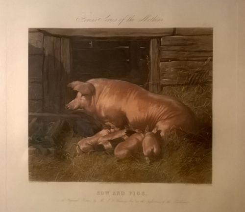 1855 hand colored print